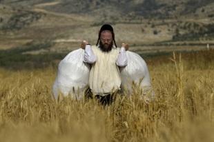 Haredi Shavuot