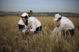 Settlers celebrating Shavuot
