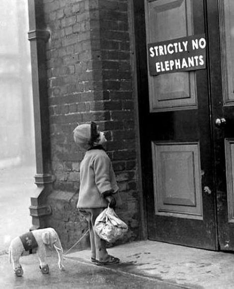 No entry for elephants